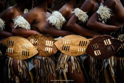 Zulu dancers with ceremonial shields. KwaZulu Natal. South Africa