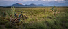 Mountain biking near Middelburg in the Karoo. Eastern Cape. South Africa