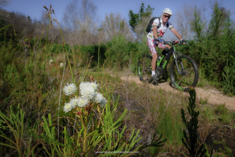 Image No: TZ110R359503 The fynbos looking good while eBiking (mountain biking). in the Outeniqua Mountains near George..