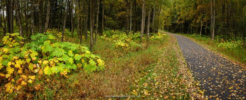 The Tony Knowles Coastal Trail. Anchorage. Alaska. United States of America