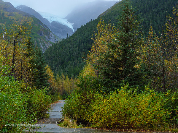 Middle Glacier at Williwaw Campground near Whittier. Alaska. United States of America