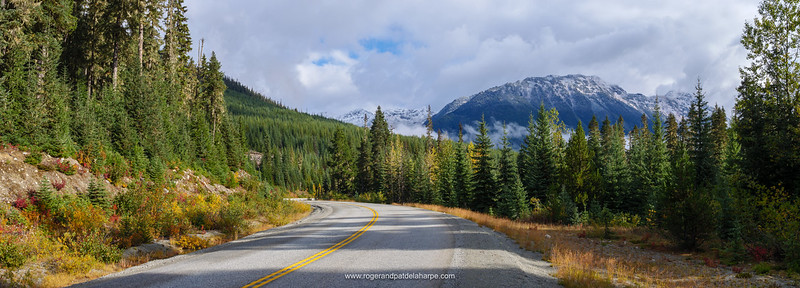 Roadside scenery showing Fall Colours. Near Pemberton. British Columbia. Canada.