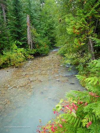 Riverine scene. Whistler. British Columbia. Canada.