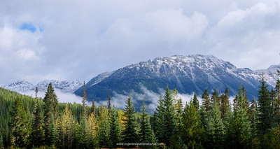 Scenery showing Fall Colours. Near Pemberton. British Columbia. Canada.
