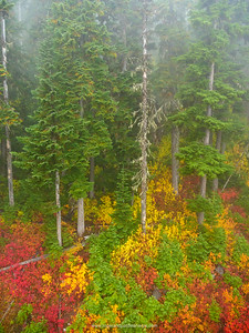 Fall (autumn) vegetation. Whistler. British Columbia. Canada.