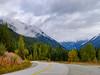 Roadside scenery showing Fall Colours. Near Pemberton. British Columbia. Canada.
