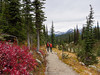 Kikers on Hiking path on the top of Mount Revelstoke. British Columbia. Canada.