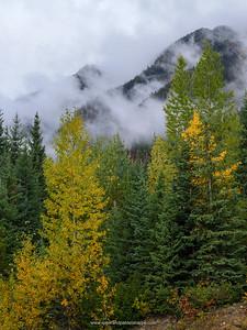 Scenery showing Fall Colours. Near Pemberton. British Columbia. Canada.