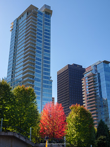 Fall colours and buildings. Vancouver. British Columbia. Canada.