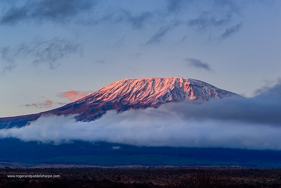 Mount (Mt) Kilimanjaro (in Tanzania)  from Satao Elerai Conservancy. Near Amboseli National Park. Kenya.