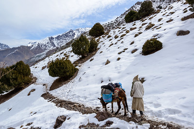 Ber Ber (Berber or Bier Bier) man transporting hood by mule. High Atlas Mountains. Imlil. Morocco.