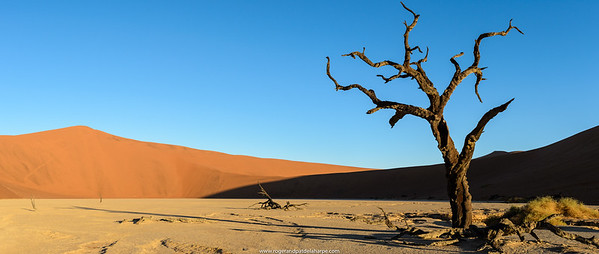 Desert scenery at Dead Pan. Sossusvlei. Namib-Naukluft National Park. Near Sesriem. Namibia