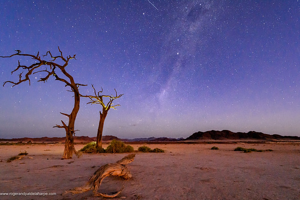 Desert scenery, the Milky Way and dead camel thorn, giraffe thorn (Vachellia erioloba) trees at night. Sossusvlei. Namib-Naukluft National Park. Near Sesriem. Namibia