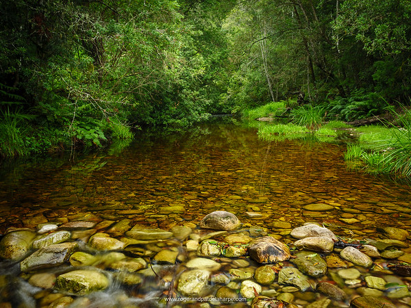 Riverine view. Forest stream. Garden Route. Western Cape. South Africa.