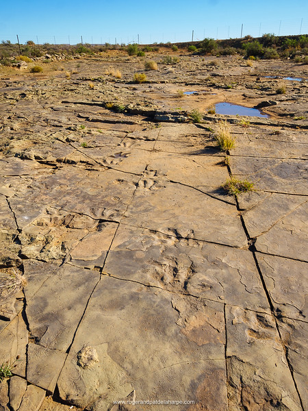 Fossilised footprints and markings. Fraserburg dinosaur site. Northern Cape. South Africa.