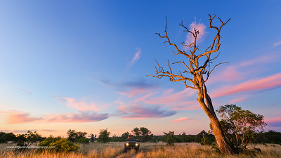 Sunset scene close to where the first white lions we seen by Chris McBride in 1975. Timbavati Game Reserve. Limpopo Province. South Africa