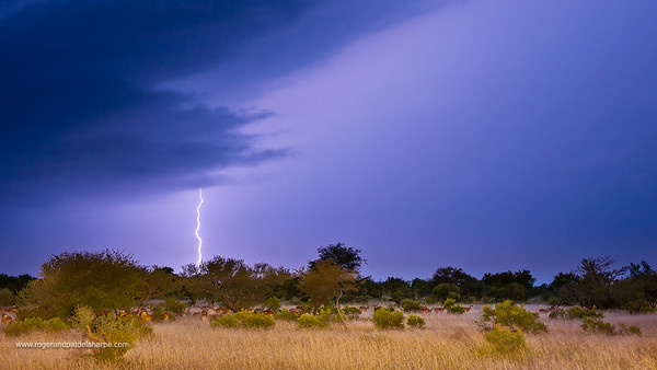 Timbavati Game Reserve Photograph