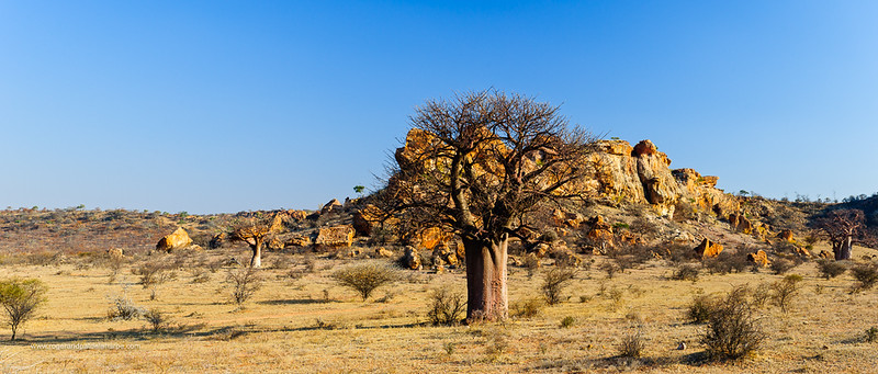 Mapungubwe National Park. Limpopo Province. South Africa.