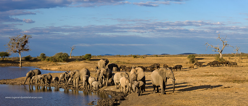 Photo Safari - Elephant Herd
