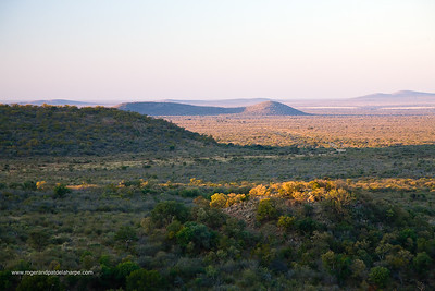 Madikwe Game Reserve. North West Province. South Africa