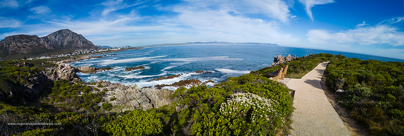 Image Number DJI-R 387668-Pano. View of the beautiful rocky coastline, Walker Bay and Klienrivier Mountains from the Cliff Path at Sievers Point. Hermanus, Whale Coast, Overberg, Western Cape. South Africa