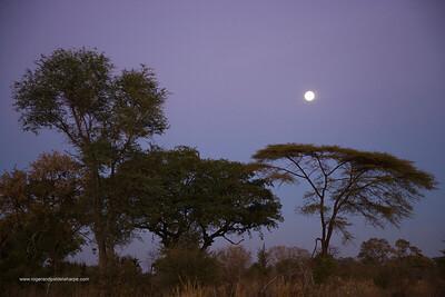 Moonset over bushveld. Victoria Falls. Zimbabwe