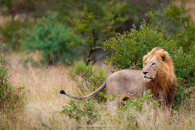 Timbavati Game Reserve Photograph