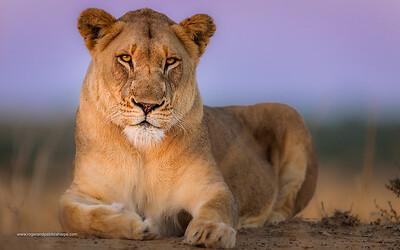 Phinda / Munyawana / Zuka Game Reserve
