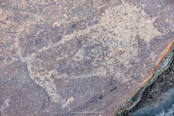 San or Bushman Petroglyph (rock engraving) of a lion (Panthera leo). Northern Cape. South Africa.