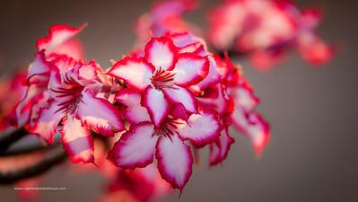 Wildlife Photographs - Flowers