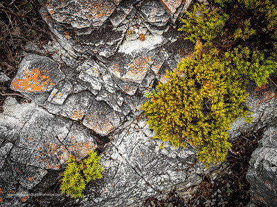 Image Number GM5R385197. Rocks and coastal vegetation along the Cliff Path in Hermanus, Western Cape. South Africa
