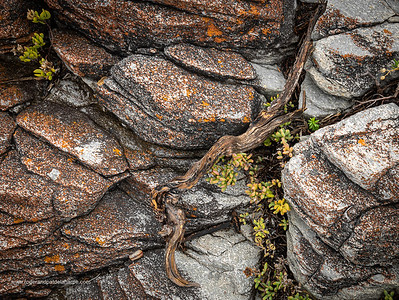 Image Number GM5R385277. Rocks and coastal vegetation along the Cliff Path in Hermanus, Western Cape. South Africa