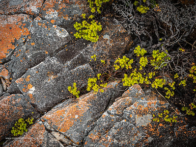 Image Number GM5R385201. Rocks and coastal vegetation along the Cliff Path in Hermanus, Western Cape. South Africa