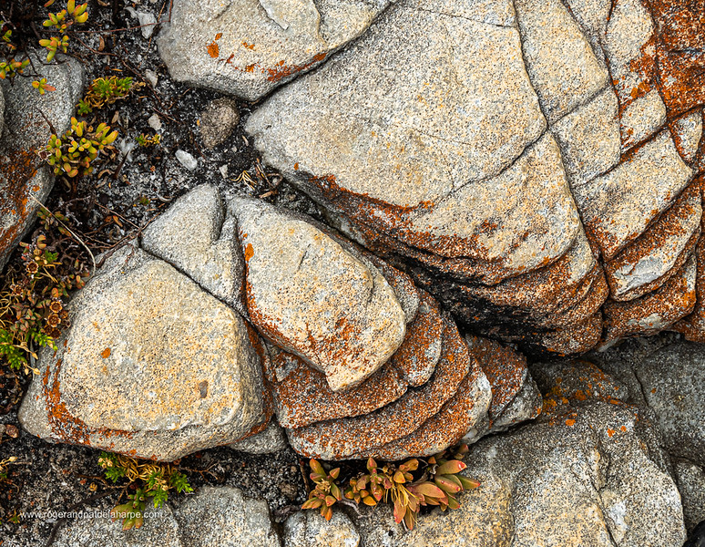 Image Number GM5R385273. Rocks and coastal vegetation along the Cliff Path in Hermanus, Western Cape. South Africa
