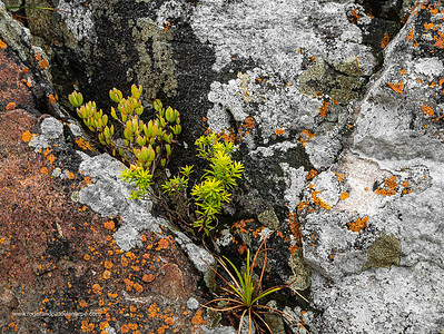Image Number GM5R385217. Rocks and coastal vegetation along the Cliff Path in Hermanus, Western Cape. South Africa