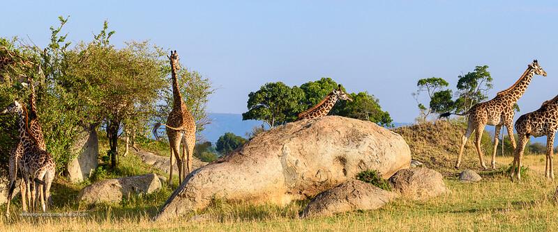 Wildlife Photographs