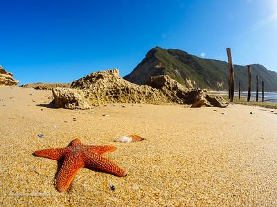 Red starfish or sea star (Callopatiria granifera). Gericke's Point at Swartvlei Beach near Sedgefield. Garden Route. Western Cape. South Africa