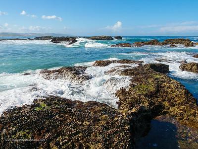 Mediterranean mussel (Mytilus galloprovincialis), an invasive alien species. Gericke's Point near Sedgefield. Garden Route. Western Cape. South Africa