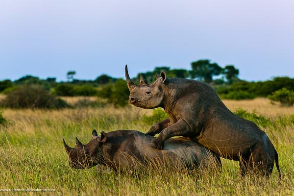 Phinda / Munyawana / Zuka Game Reserve Photograph