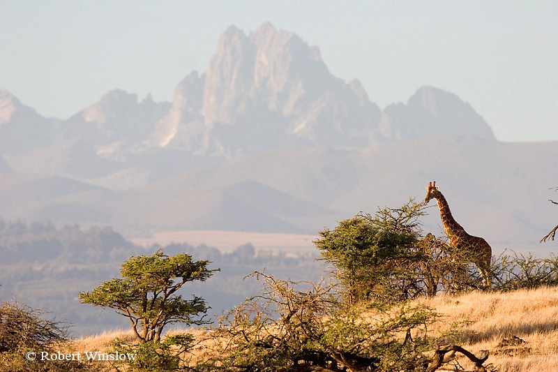 INTERNATIONAL TRAVEL - LOCATIONS OUTSIDE THE USA - STOCK PHOTO LISTINGSImage of Mount Kenya with Reticulated Giraffe, Lewa Wildlife Conservancy, Kenya 