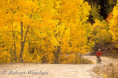 OUTDOOR RECREATION - STOCK PHOTO LISTINGS Image Caption: Model Released, Autumn, Female Mountain Biker, Lime Creek Road, San Juan Mountains, San Juan National Forest, ColoradoB - BICYCLING  010  1988 Coors Bicycle Classic - Men 020  1988 Coors Bicycle Classic - Women 030  Road Bike Races 040  Recreational Road Biking 050  1990 World Mountain Biking Championship 060  Mountain Bike Races 060  Mountain Bike World Cup 070  Recreational Mountain Biking  080  Mountain Bike Polo   S - SPORTS/OUTDOOR RECREATION   010  Alpine Skiing  020  Backpacking  023  Baseball  030  People With Camera  040  Canoeing  050  Boats (Misc.)  060  On Boat (Cruise)  070  Cross Country Skiing - Race  080  Cross Country Skiing - Recreational  090  Cross Country Skiing - Yellowstone  100  Fishing  103  Football  105  Gliders/Sailplanes  107  Golf  110  Handicapped Sports (Disabled)  120  Hang Gliding  125  Horseback Riding  130  Ice Climbing  140  Ice Skating/Hockey  150  Kayaking  160  Kayaking - Animas River Days  165  Kayaking - Sea  170  People/Wilderness/No Backpacks/Mountains  180  People/Wilderness/No Backpacks/Deserts  190  Mountaineering  200  Rock Climbing  210  Rafting - General  220  Rafting - Colorado River  230  Rafting - Salmon River  240  Rafting - Snake River  250  Rodeos  255  Running/Jogging  260  Skydiving  270  Snowboarding  280  Snowmobiling  290  Snowshoeing  295  Soccer  300  Surfing - Fresh Water  310  Surfing - Salt Water  320-Tubing