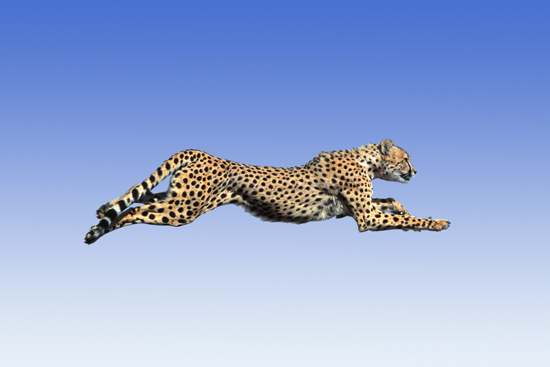 ANIMAL SPECIES - STOCK PHOTO LISTINGS 