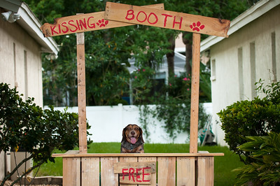 Beagle sittingin a kissing booth