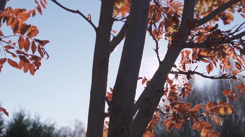 New Zealand Tree Sun Flare 1080P