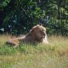 African Animals-2