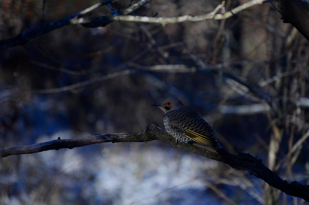 Other Birds-13