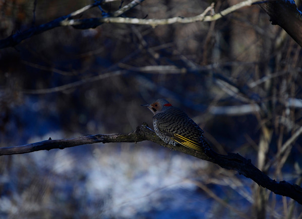 Other Birds-14