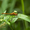 Dragon Flies-16