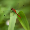 Dragon Flies-17