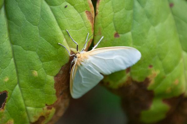 Moth-4